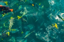 You can spot beautiful tropical fish while out on a boat to El Arco