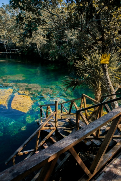 Cenotes can be found all over Tulum and Cancun. Dive into these natural swimming pools